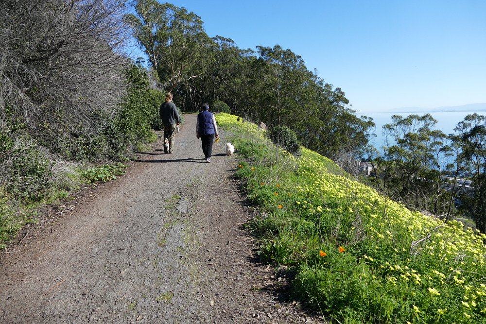 Bayview Hill Park is known for its wildlife, wildflowers and astounding views.