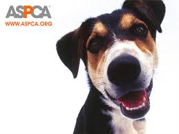 Giving to ASPCA to help abused animals