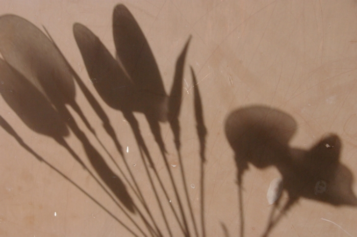 SEAM_DyeBath_Flowers.jpg