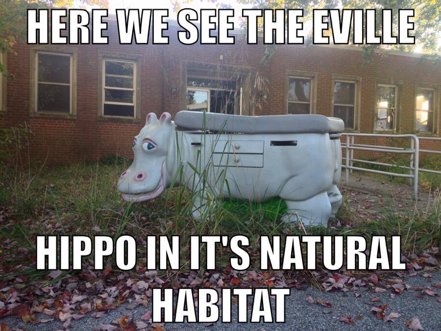 eville hippo.jpg