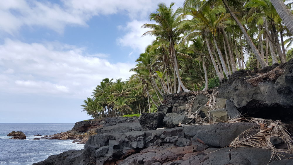 PHOTO TAKEn ON THE BIG ISLAND OF HAWAII BY WISE OWL MALLORY