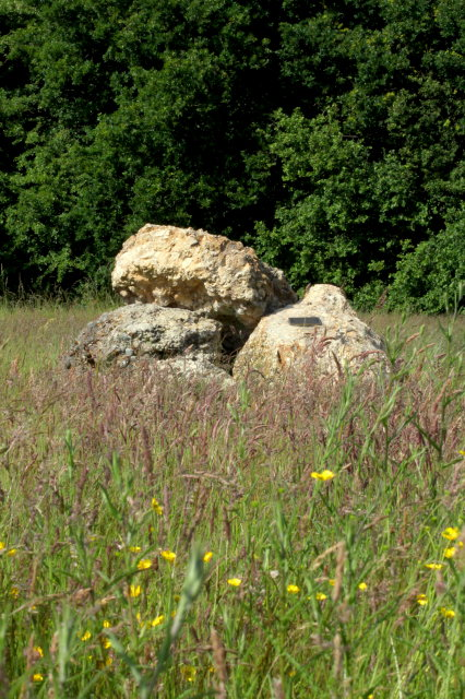 Puddingstones on Cholesbury Common. Photo courtesy of David Dennis