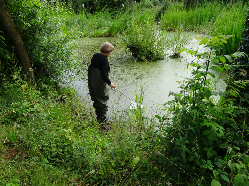 Linden with net pond dipping at Pallet's Pond. Photo by Stephen Bevan-Pritchard