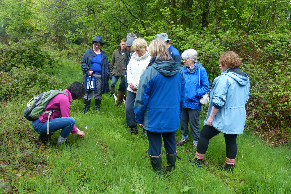 Wildflower walk on Hawridge and Cholesbury Commons, lead by Isobel Clark - HCCPS