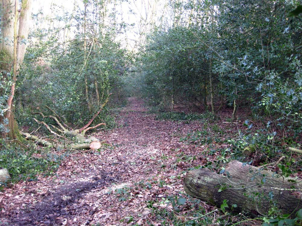 Conservation work to clear paths on Hawridge and Cholesbury Commons