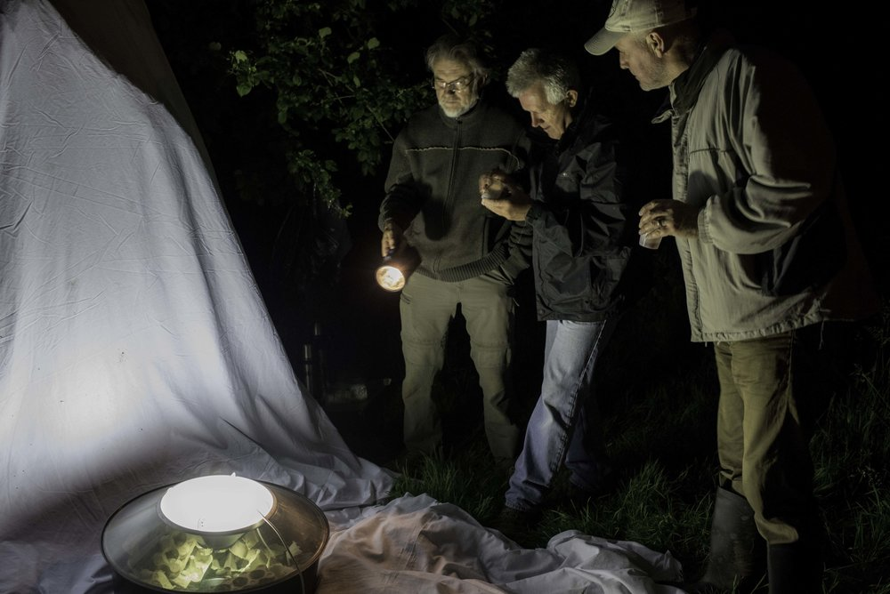 Moth Trapping HCCPS 2016.jpg