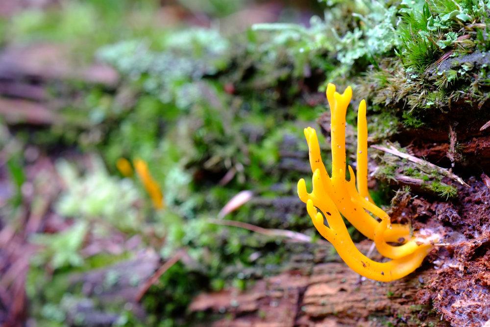 fungibanner.jpg