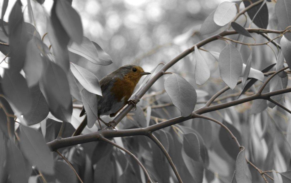 Robin-2 small (1).jpg