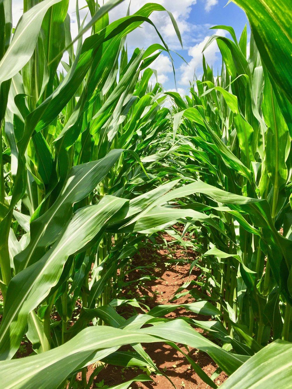 FARMING NEWS -