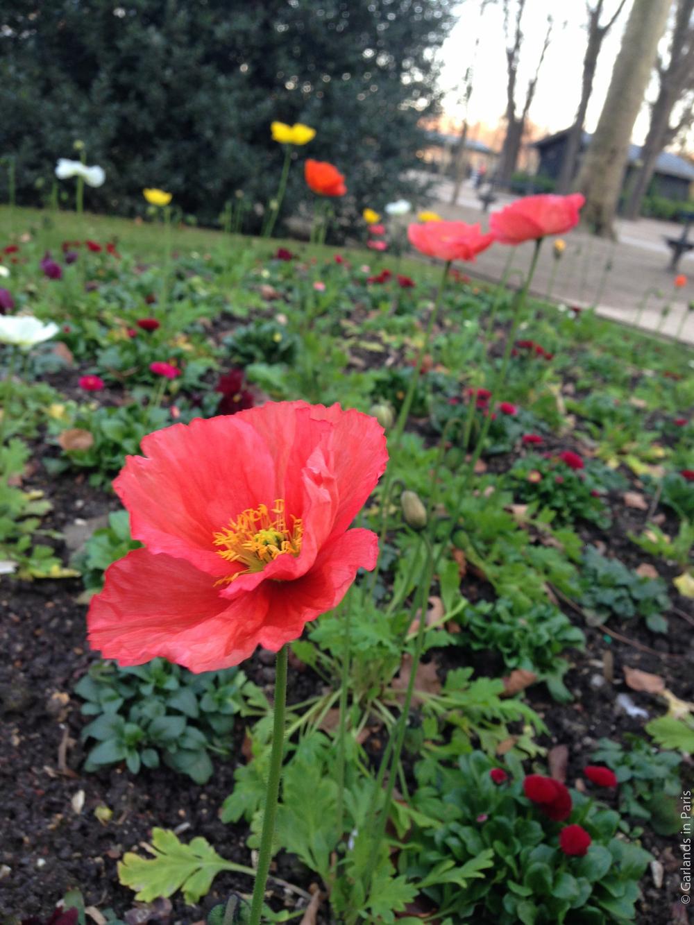 Flower, Jardin du Luxembourg, Garden