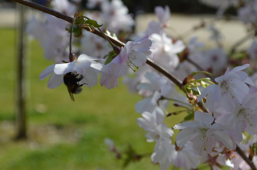 Luxembourg Garden Paris Bee