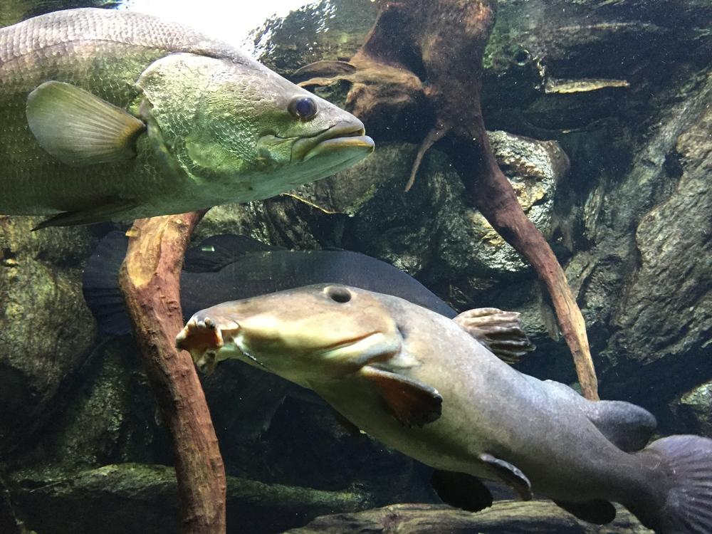 Aquariums: Zoos of the Seas and Rivers — Imaginibus