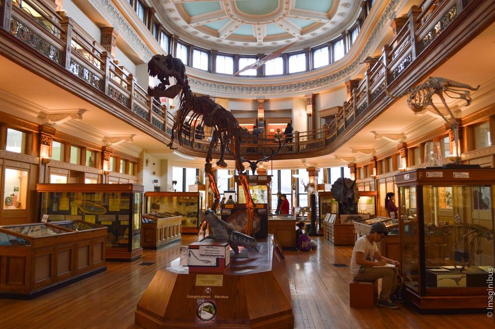 Redpath Museum, Montreal, Dinosaur