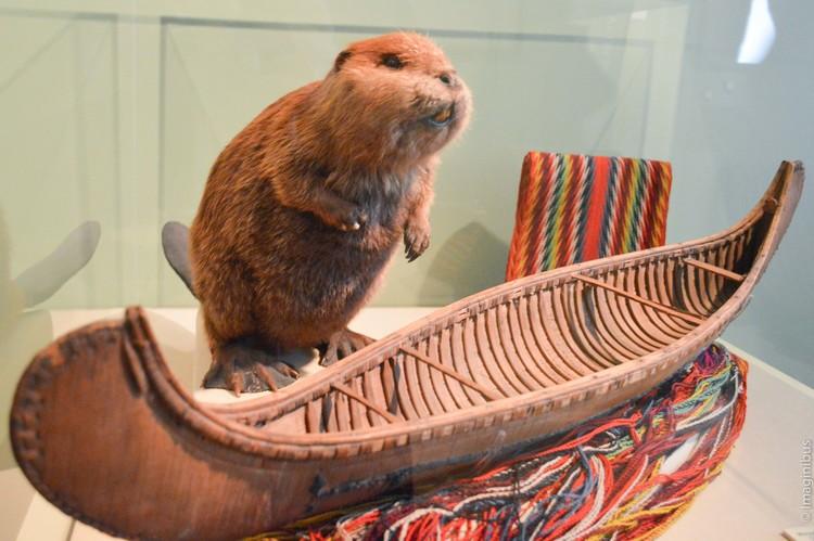 Beaver Chateau Ramezay