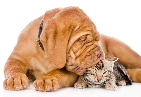 dog-cat.jpg