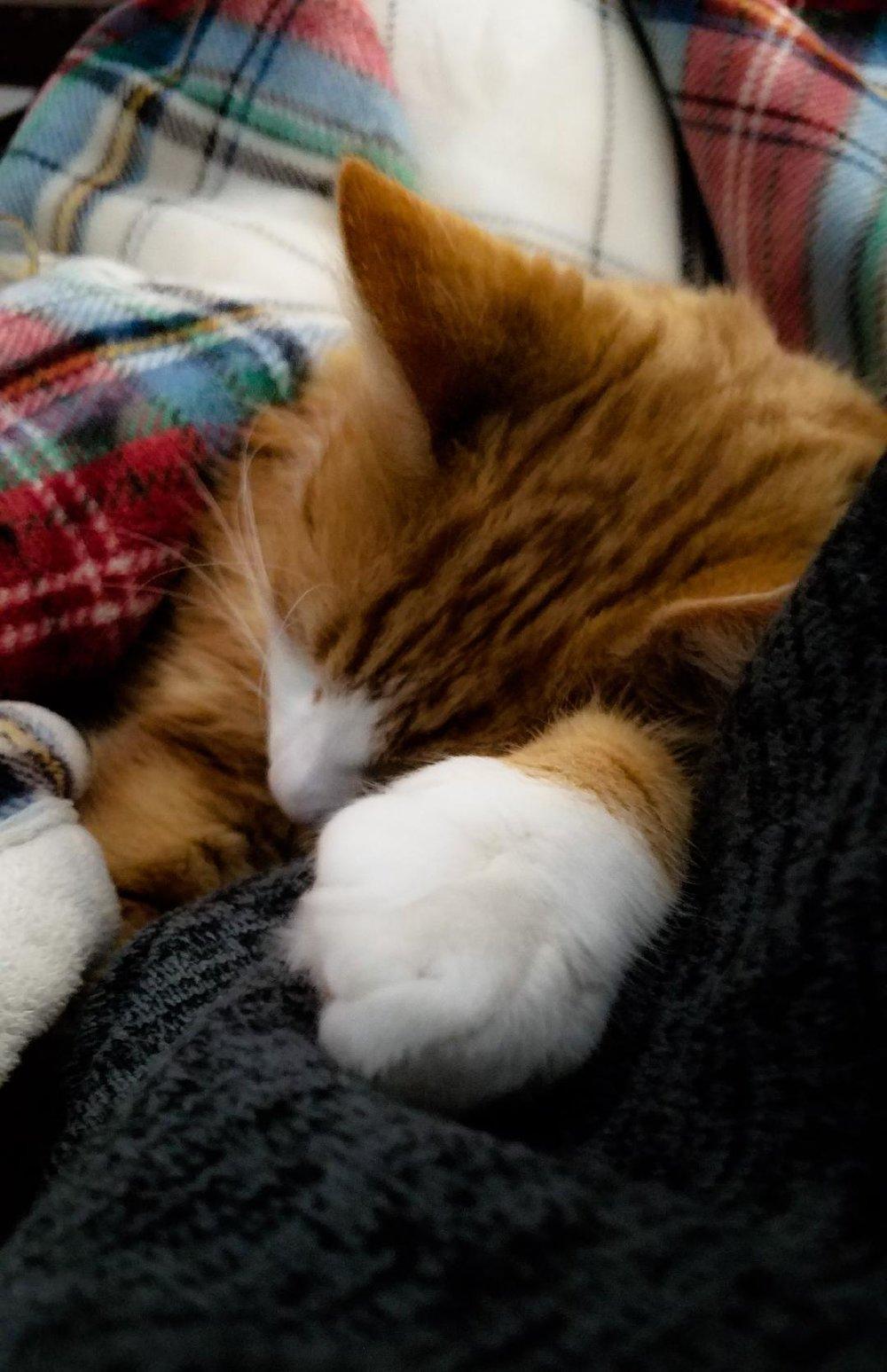 Kitty baby.jpg