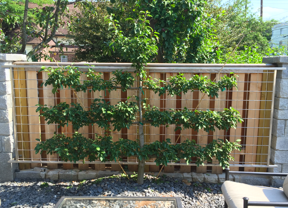 Stainless Steel Espalier Frame