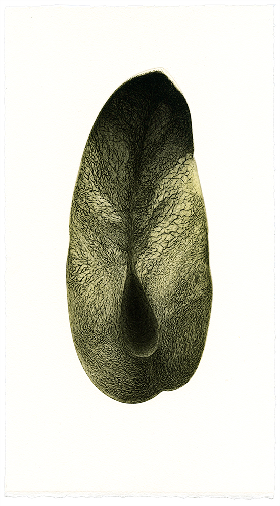 Coupe-dun-fruit_etching_2012.jpg