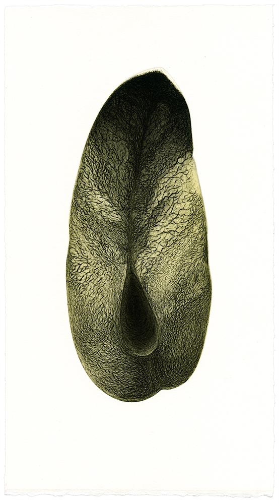Coupe-dun-fruit_etching_2012.jpg
