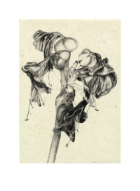 Milette-Lovebird-prix excellence Japon.jpg