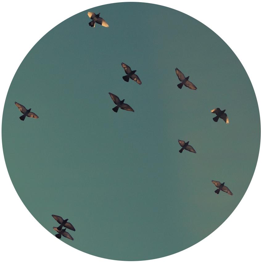 birds circle.jpg