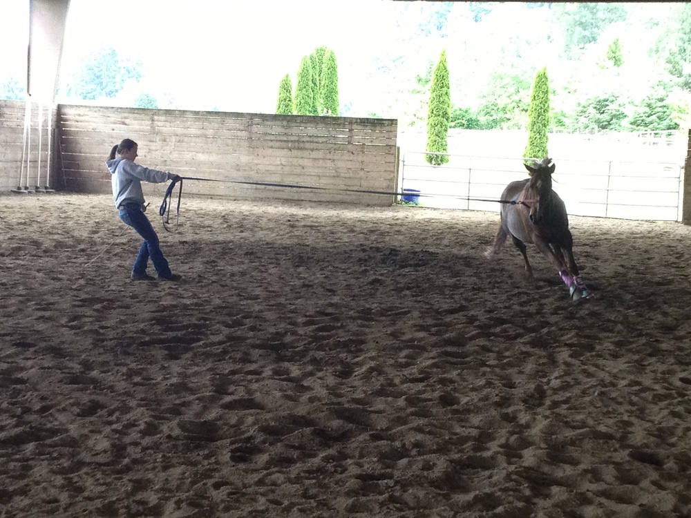 Katy working with Gracie.  Good groundwork is the essential foundation.