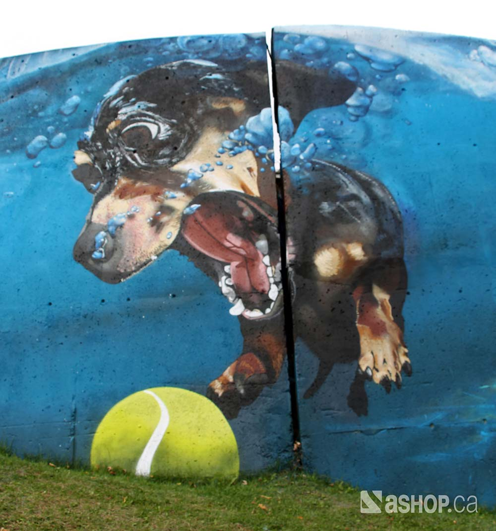 ashop_a'shop_murals_graffiti_street_art_montreal_pointe_claire_dog.jpg