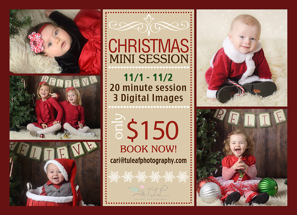 Albany Baby Photographer christmas photos