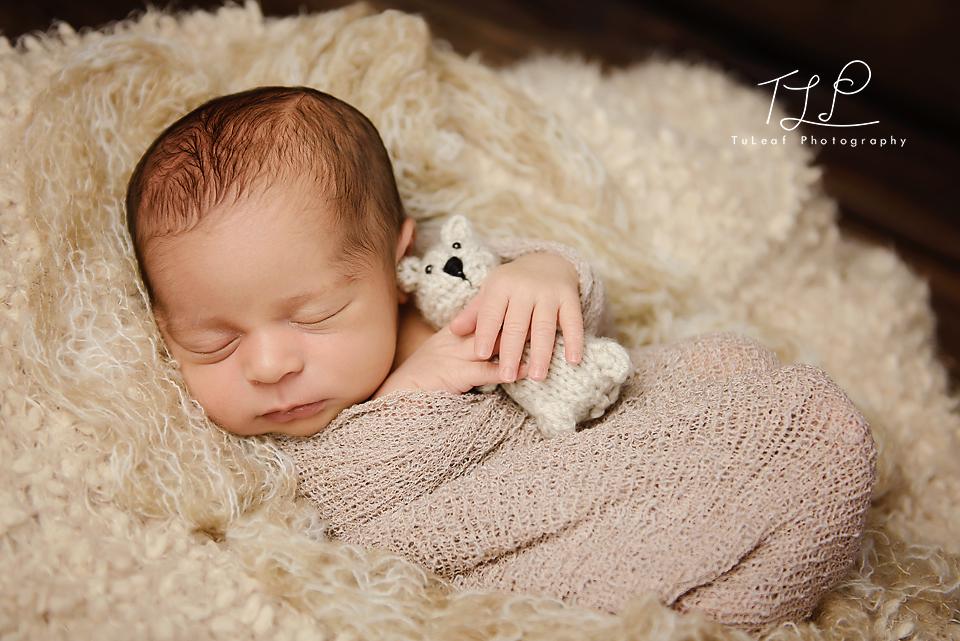 baby photography albany teddy bear