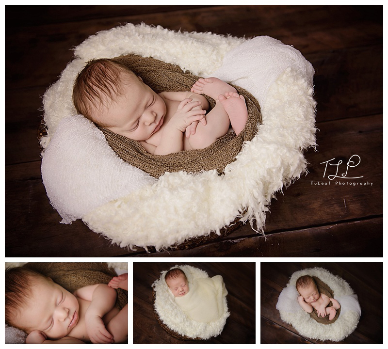 albany baby photographer brown wrap