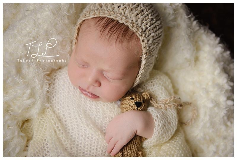 albany baby photo teddy bear