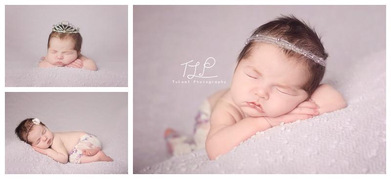 albany newborn photographer purple props