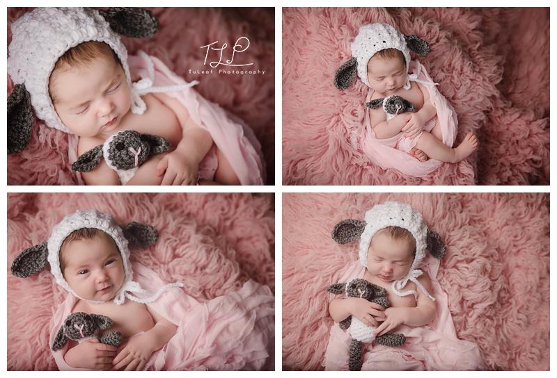 albany newborn photos pink blanket