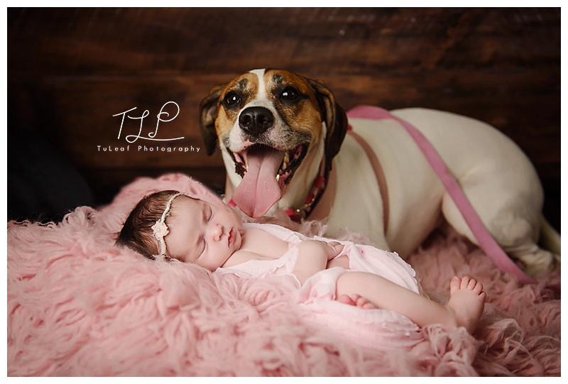 albany baby photo newborn and dog