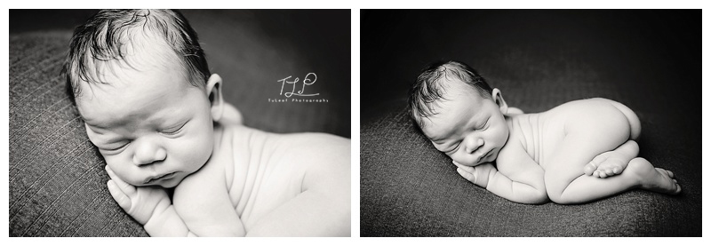 baby photography albany black and white