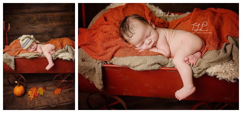 newborn photography prop albany baby