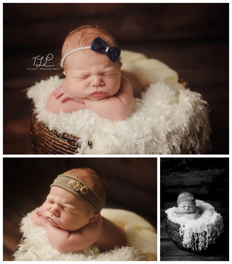 albany newborn photographer baby in basket
