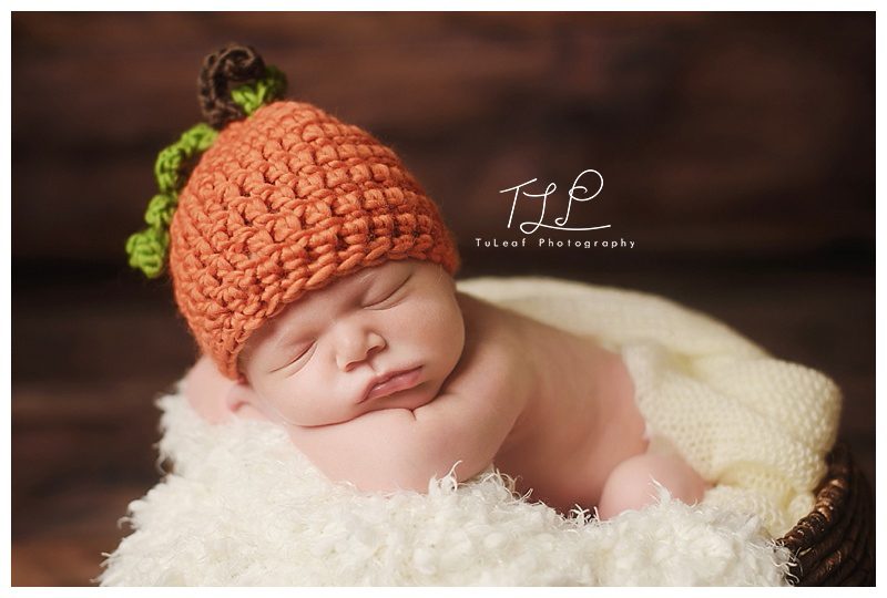 albany newborn photo sweet pumpkin