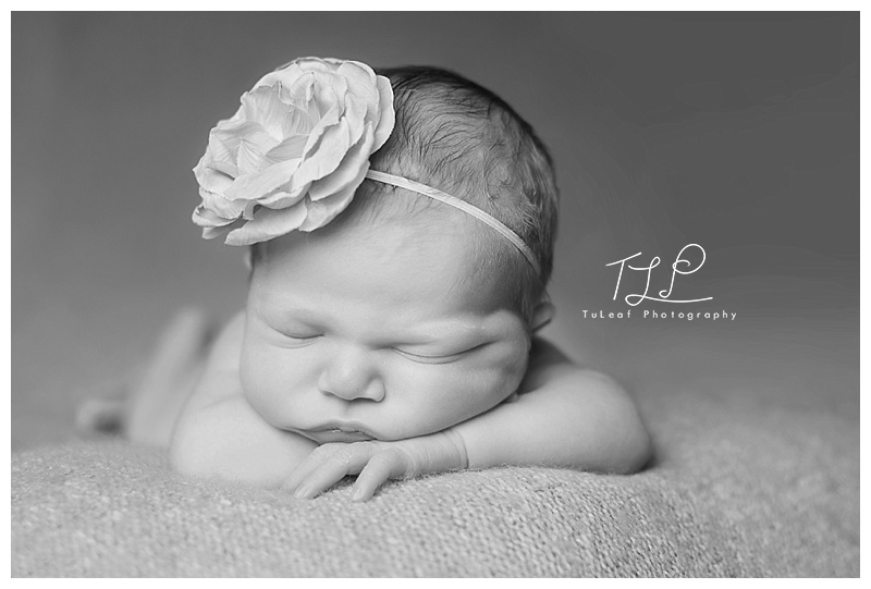 newborn baby girl albany photographer