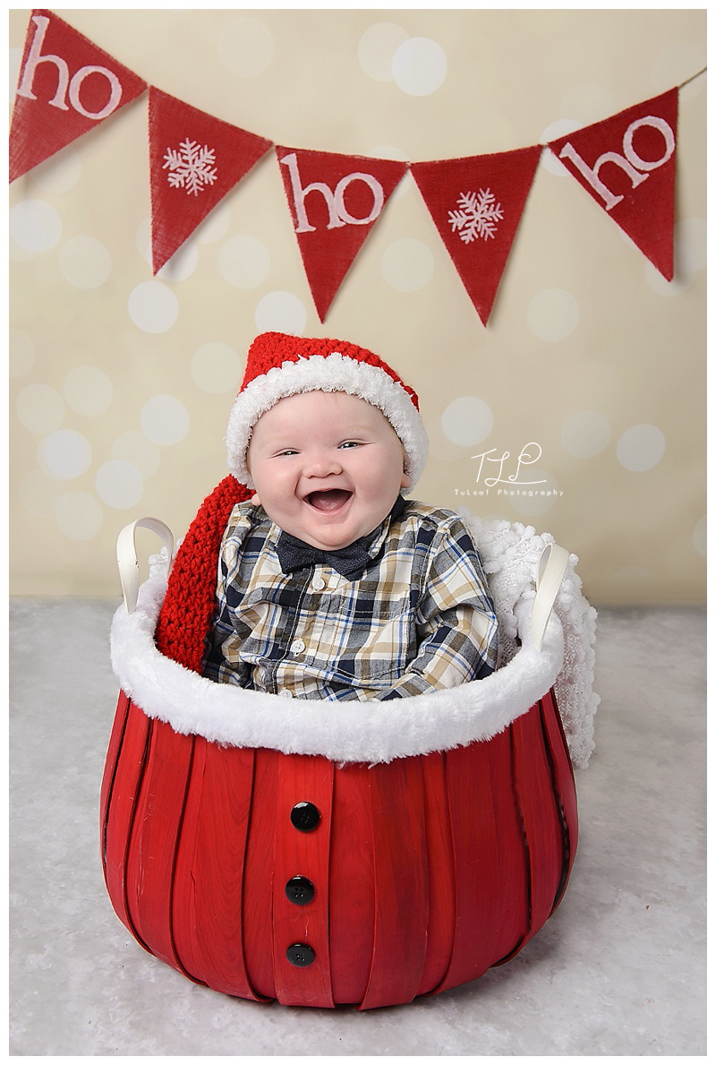 baby photographer albany christmas photos
