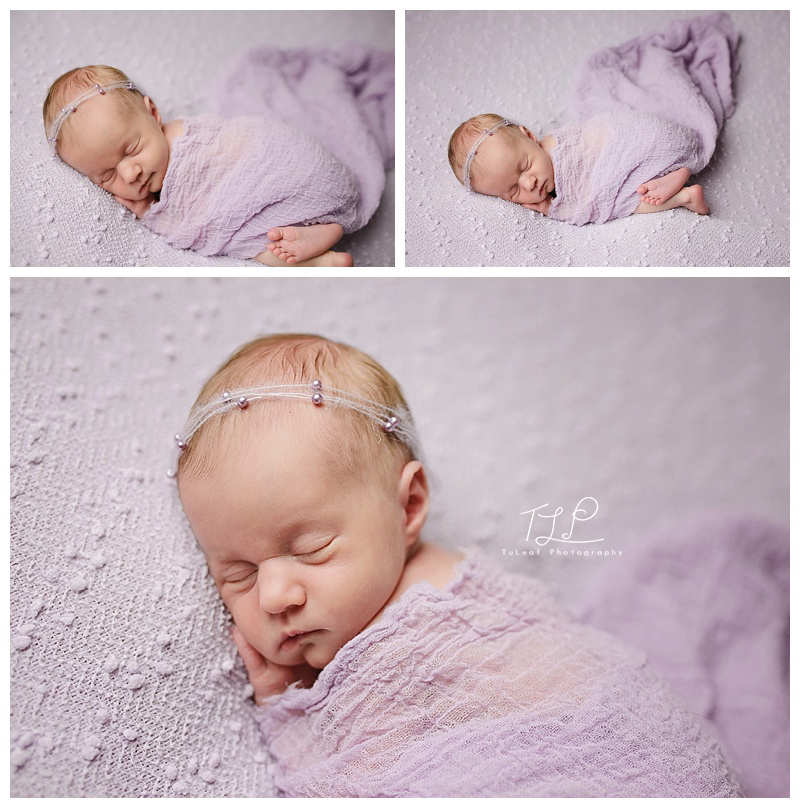 newborn baby photographer albany pretty in purple