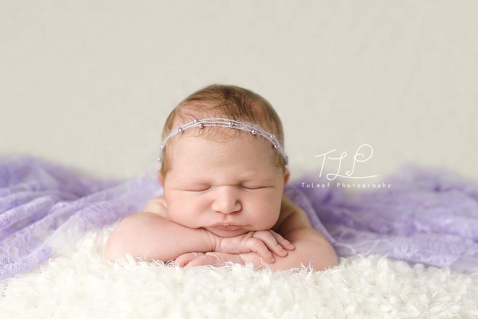 albany newborn photographer purple lace