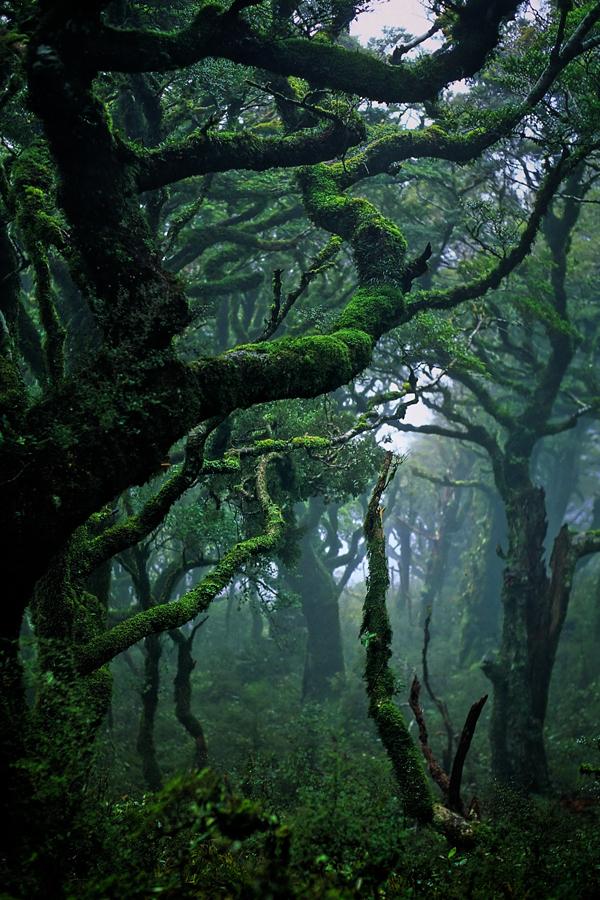 ninbra: Subtropical rainforest in Waikaremoana, New Zealand.