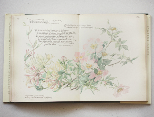 fuckyeahbookarts: Pages from 'The Country Diary of An Edwardian Lady'