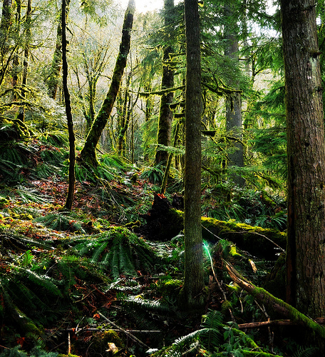 woodendreams: (by Darrell Wyatt)