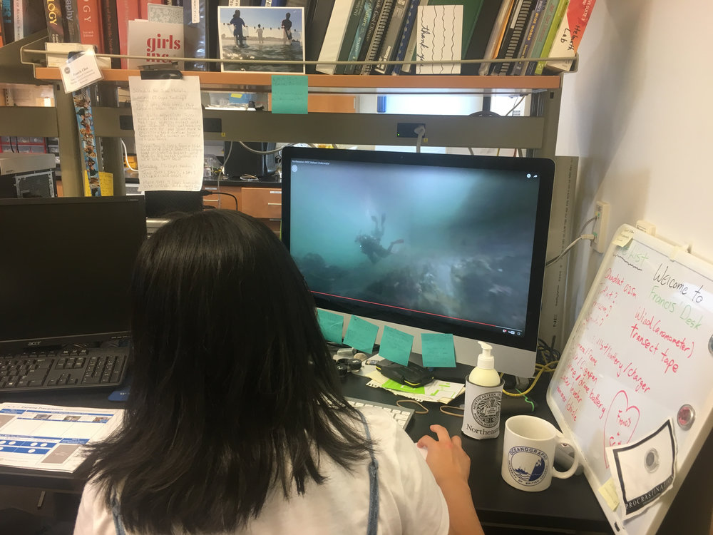 Navigating a virtual tour in the ocean! Try it out yourself on   their web site  .