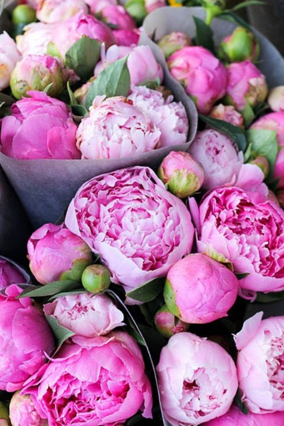 http://www.brightboldbeautiful.com/2013/03/15/happy-weekend-2/    Spring Flower: Peonies