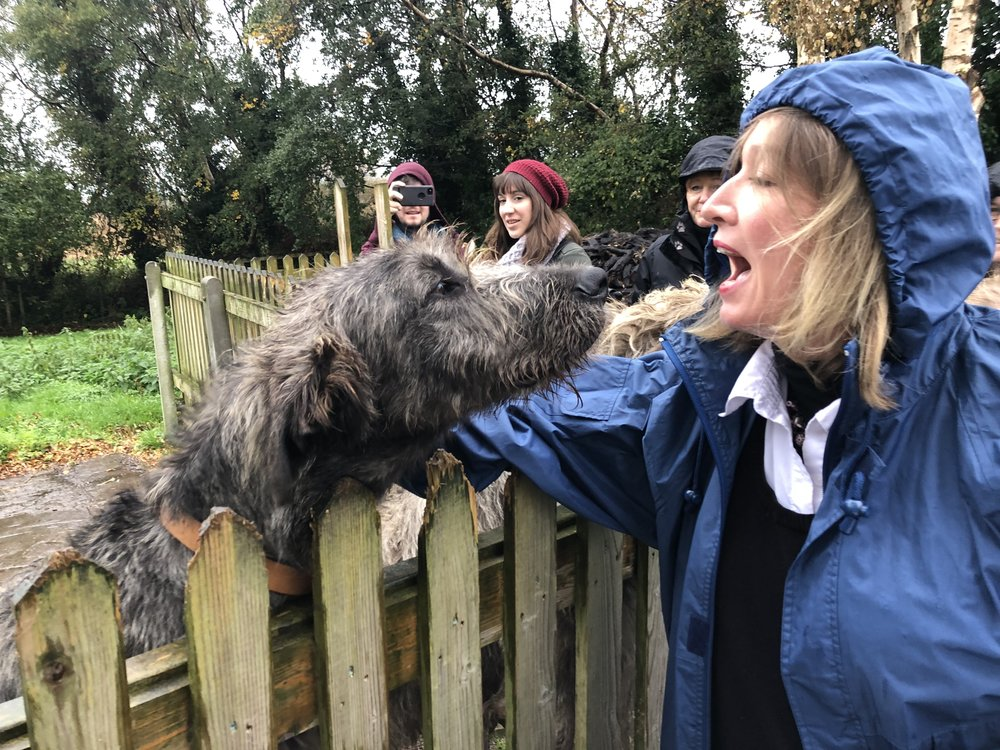 Mary gets to know an Irish one of the wolf hounds. These dogs are huge!