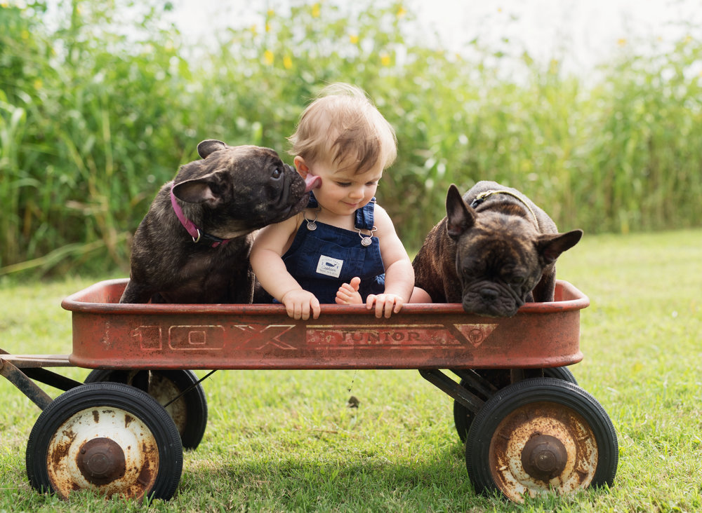 boy with dogs, 1 year photos