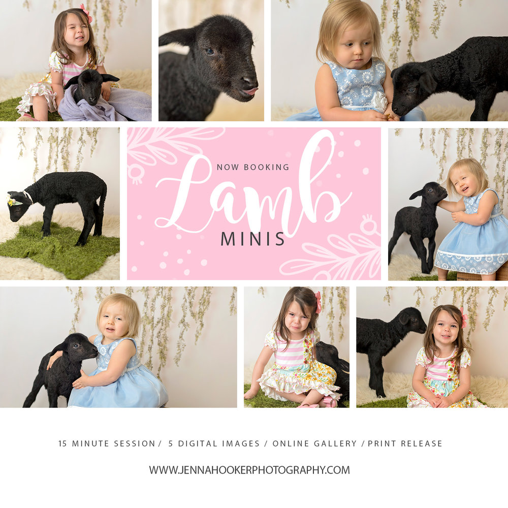 Lamb Mini's.jpg